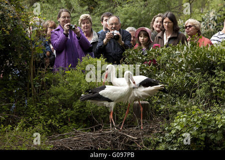 Stork with some people, Duisburg Zoo, Germany. - Stock Photo