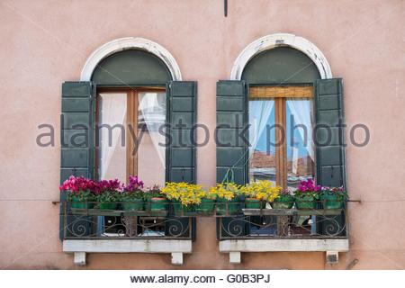 Venetian window box with succulents and cyclamen Venice, Italy, April - Stock Photo