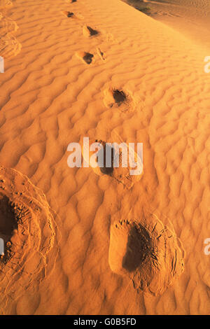 Desert Rub al Chali - Stock Photo