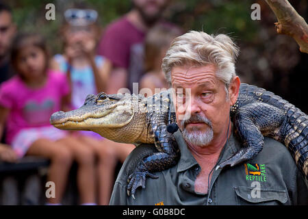 An educator gives a talk to visitors to the Australian Reptile Park, with a live Alligator on his shoulders - Stock Photo