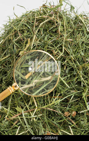 A needle in a haystack - Stock Photo