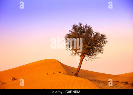 Tree in the Rub al Khali Desert - Stock Photo