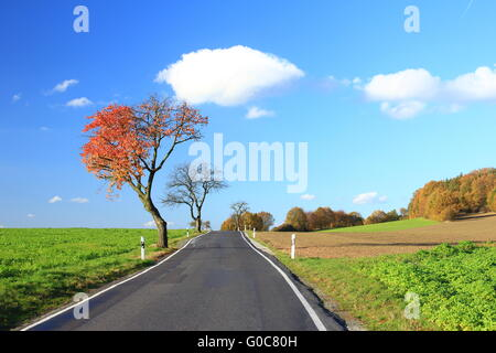 Autumn tree on a country road - Stock Photo