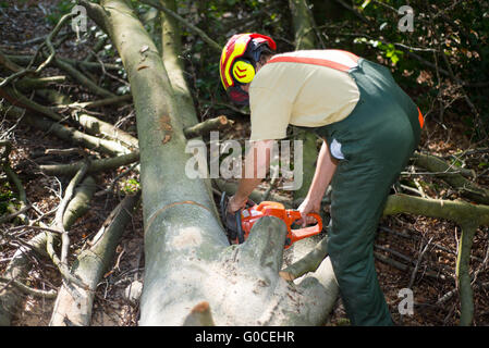 lumber jack during work with protective clothing - Stock Photo