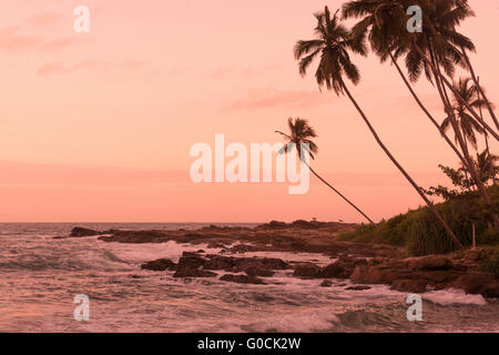 Pink sunset and two dogs at Rocky Point, Sri Lanka - Stock Photo