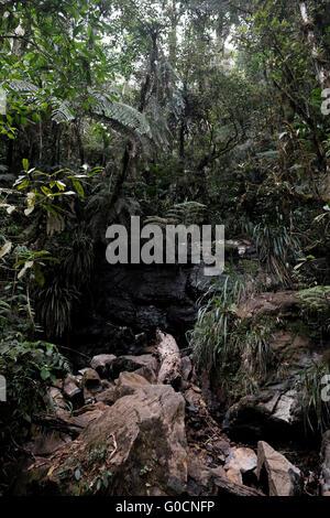 biotopo, Mario Dary Rivera Quetzal Reserve, Purulha, Baja ...