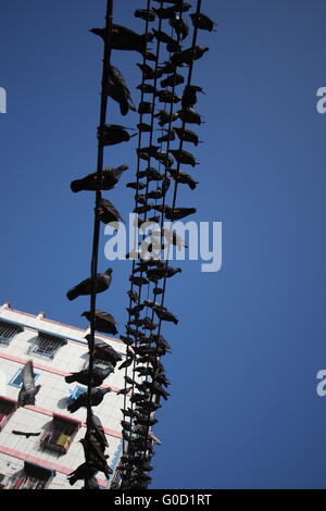 Pigeons on telephone wires in downtown Yangon, Burma - Stock Photo