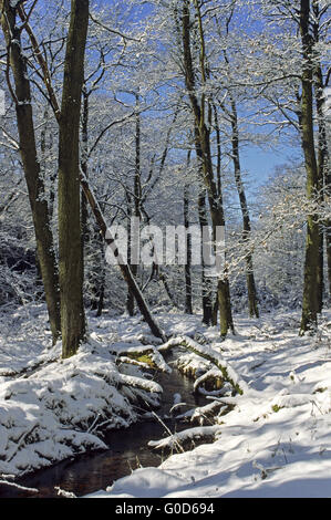 Forest creek flows through a mixed forest - Stock Photo