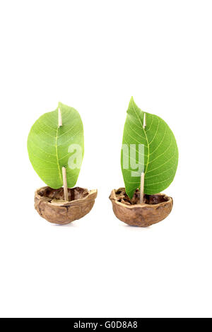 two cockleshell from a walnut shell with leaf sail - Stock Photo