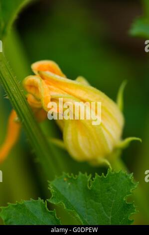 Summergarden beauty - Stock Photo