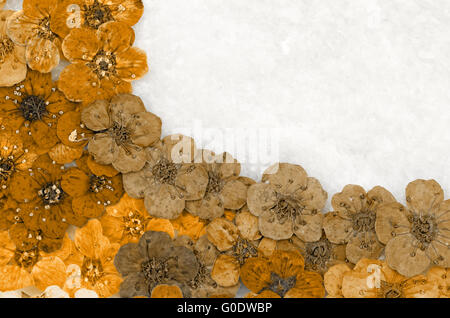 Decorative montage compilation of colorful dried spring flowers (brown) - Stock Photo