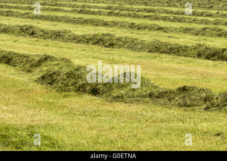 Hay Harvest - Stock Photo