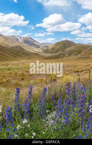 Hills, tussock and lupins, Otago, New Zealand - Stock Photo