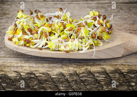 Tasty radish sprouts in wooden spoon - Stock Photo