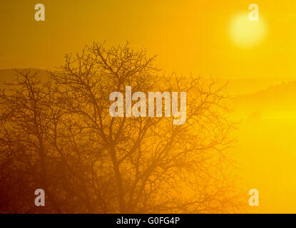 Fog on the Höri at Lake Constance - Stock Photo