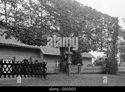Seventies, black and white photo, windbreak hedge, wayside cross at a tree, D-Monschau, Rur, Rureifel, High Fens - Stock Photo