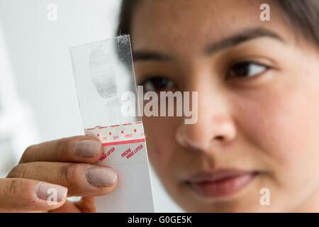 Forensic scientist examining fingerprint - Stock Photo