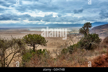 view from the rim into the Ngorongoro crater, Ngorongoro Conservation Area, UNESCO world heritage site, Tanzania, - Stock Photo