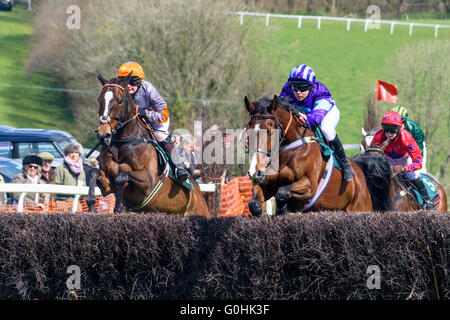 Two bay horses jumping a fence side by side during a point-to-point race - Stock Photo