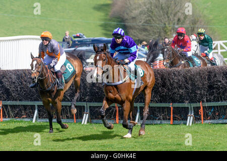 Two bay horses gallop away from a fence they just jumped during a point-to-point race - Stock Photo