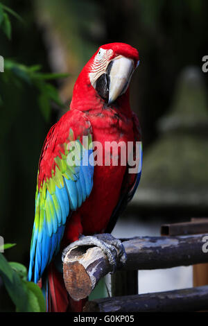Parrot on a branch - Stock Photo