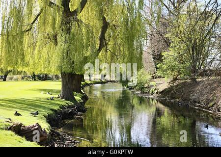 Bourne Lincolnshire UK - river - weeping willow trees - Stock Photo