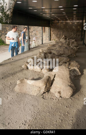 Tourist tourists in Garden of the Fugitives; casts / cast of dead / fugitive body / plaster bodies Pompeii Pompei - Stock Photo