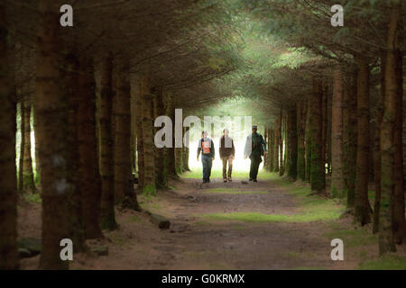 Ranger and volunteers in pine forest West Forth Scotland - Stock Photo