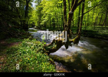 Small river Curak in Zeleni vir in Croatia typical scene scenic longexposure nice long-exposure - Stock Photo