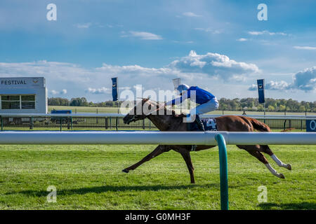 The winning horse Hawkbill from the QIPCO 2000 guineas race at the Newmarket Racecourses horses racing on a sunny - Stock Photo