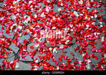 Many red and white rose petals scattered on the sidewalk. - Stock Photo
