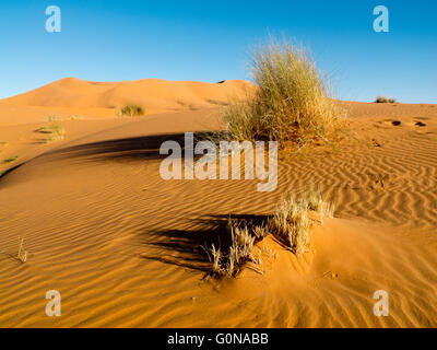 The Erg Chebbi sand dunes in Merzouga - Stock Photo