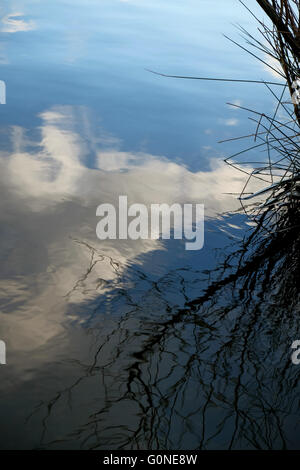 blue sky with white clouds and branches reflected in calm water