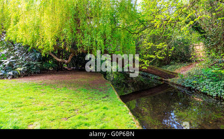 A weeping willow tree leaning over a canal and grassy towpath at New River Walk, Canonbury, London - Stock Photo