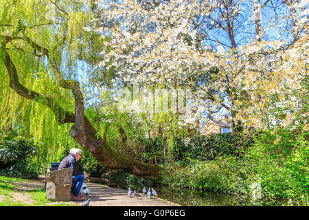 London, UK -  April 28, 2016 - Two elderly gentlemen on a bench feeding pigeons next to the canal waterway at the - Stock Photo