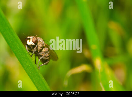 Fly sitting on grass - Stock Photo
