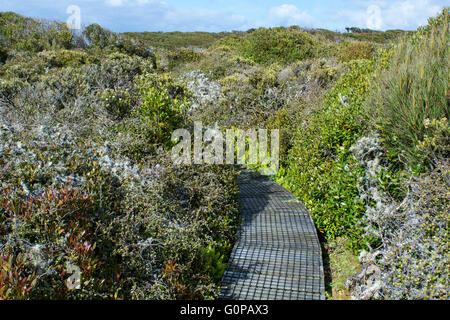 New Zealand, Auckland Islands, uninhabited archipelago in the South Pacific Ocean, Enderby Island. Raised wooden - Stock Photo