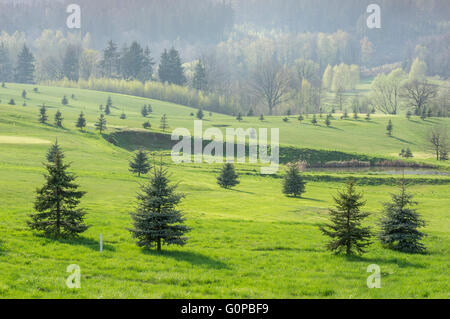 Hills fresh green grass small spruces bright spring sunlight - Stock Photo