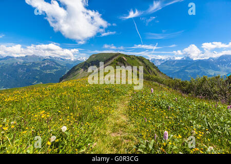 Stunning view on the hiking path on Bernese Oberland with beautiful flowers in foreground and mountain range of - Stock Photo