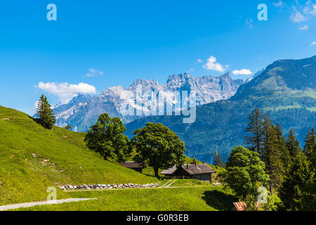 Panorama view on the hiking path on Bernese Oberland with trees in foreground and mountain range of the alps in - Stock Photo
