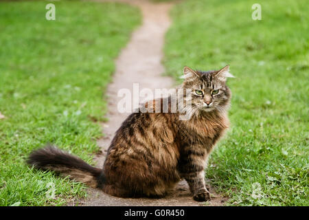 Portrait of frightened cat sitting at the road - Stock Photo