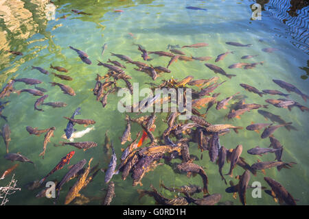 Group of small fish in a pool from the gardens of the Alcazar of the Christian Monarchs Cordoba, Andalusia, Spain - Stock Photo