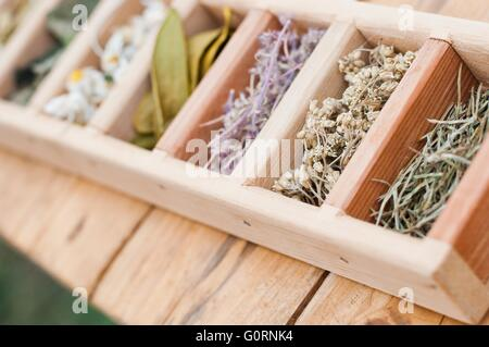 Assortment of dry medicinal herbs in wooden box - Stock Photo
