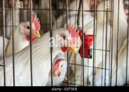 Chicken coop - Stock Photo