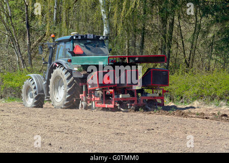 Tractor with a mounted tree planting machine planting Christmas trees, in this case Nordmann fir on a field neighbouring - Stock Photo