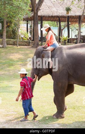 Elephant Tourist Posing riding bathing Experience at Elephant Kingdom in Chiang Rai Thailand - Stock Photo