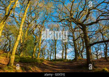 A path leading through the Ercall woods in Shropshire, England, UK. - Stock Photo