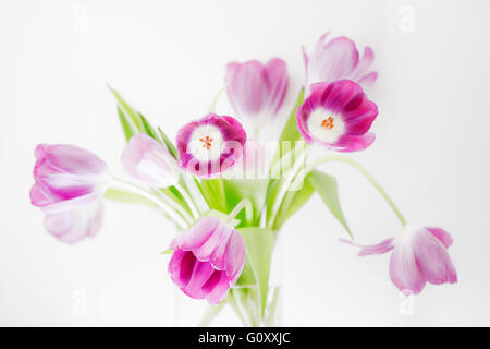 Tulip Extravaganza - An informal, modern arrangement of pink tulips in a glass vase set against a bright white background. - Stock Photo