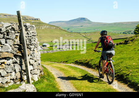 Woman mountain biking near Austwick in the Yorkshire Dales National Park with Pen-y-Ghent on the skyline - Stock Photo