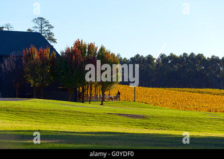 Vines shaw and smith winery landscape vineyard countryside for Adelaide hills landscape